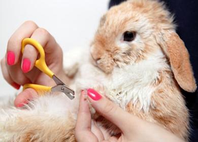 negleklip og klipning af kanin med filt