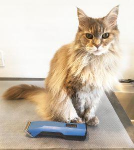 Emma hos kattefrisør